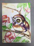 dessin d'oiseau réalisé à l'aquarelle en cours ado, encadré par Coraline Van Butsele aux Ateliers Créatifs de Villers-Cotterêts.