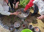 stage raku encadré par Isabelle Blutel aux ateliers créatifs de villers-cotterêts. cuisson et enfumage