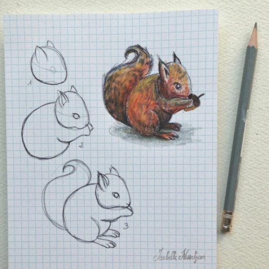 dessin drawing Squirrel