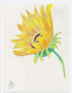challenge aquarelle cours de dessin les ateliers créatifs à villers cotterets